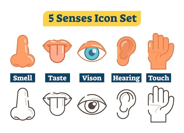 Fünf menschliche körper sinne. vektor-illustration icon-sammlung. Premium Vektoren