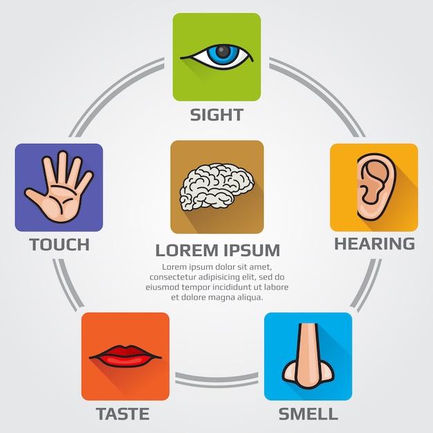 Fünf menschliche sinne riechen, sehen, hören, schmecken, sensorische infografiken mit nase, hand, mund Premium Vektoren