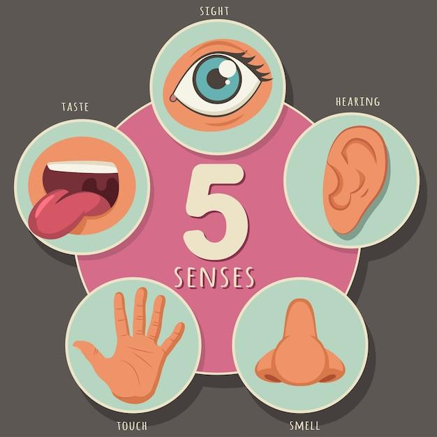 Fünf sinne eines menschen: sehen, hören, riechen, schmecken und berühren. vector karikaturikonen von augen, von nase, von mund, von ohr und von hand, die lokalisiert werden Premium Vektoren