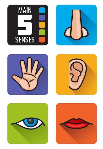 Fünf sinne, nase, hand, mund, auge, ohr symbole gesetzt. satz menschliche sinne riechen anblick, hören Premium Vektoren