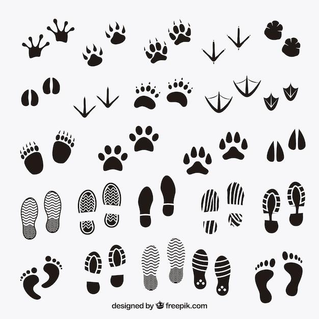 Fußspuren schatten von tieren und mensch Kostenlosen Vektoren