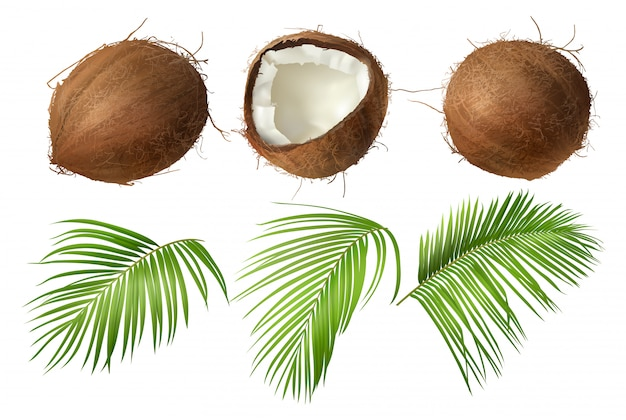 Ganze und gebrochene kokosnuss mit grünen palmblättern Kostenlosen Vektoren