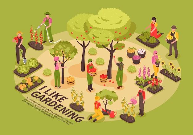 Gartenarbeit isometrische infografiken Kostenlosen Vektoren