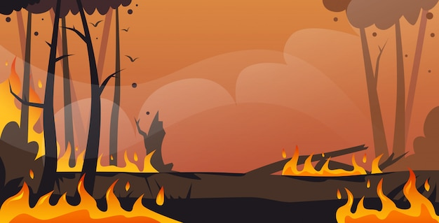 Gefährliches verheerendes buschfeuer entwicklung trockenes holz brennende bäume globale erwärmung naturkatastrophe ökologie-problemkonzept intensive orange flammen horizontal Premium Vektoren