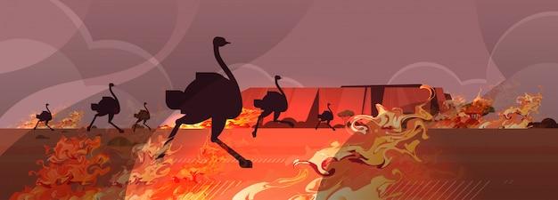 Gefährliches verheerendes feuer australien-waldbrände mit schattenbild des trockenen waldes des buschfeuers der wild lebenden tiere der strauße brennenden naturkatastrophenkonzeptes der bäume intensive horizontale vektorillustration der orange flammen Premium Vektoren