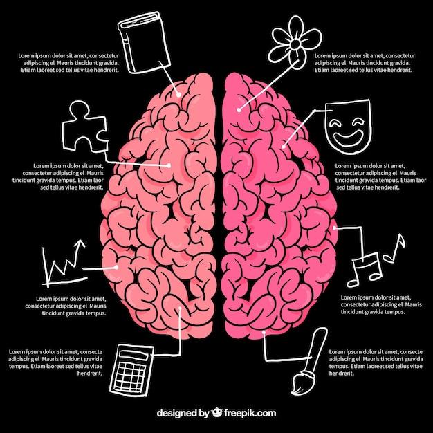 Gehirn infografiken mit zeichnungen Premium Vektoren