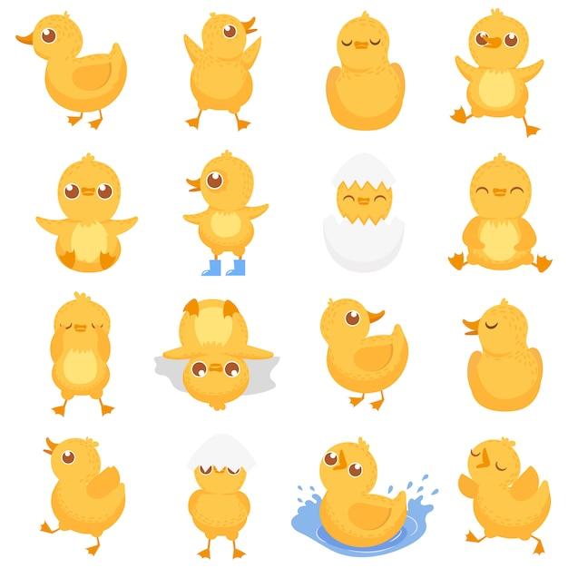 Gelbes entlein, nettes entenküken, kleine enten und ducky baby lokalisierte karikatur Premium Vektoren
