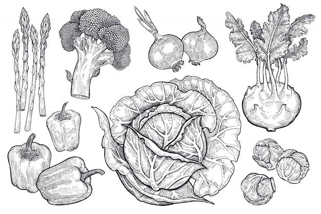 Gemüse eingestellt. vintage grafiken. Premium Vektoren