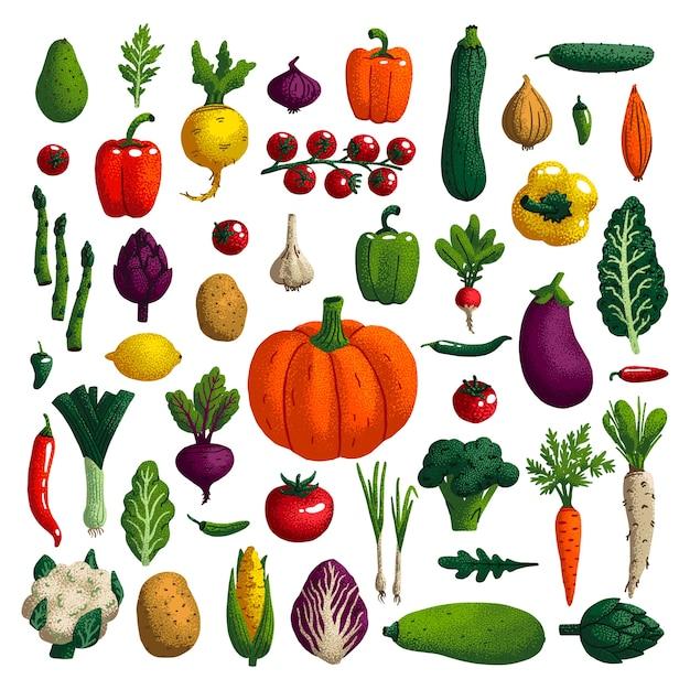 Gemüse eingestellt Premium Vektoren