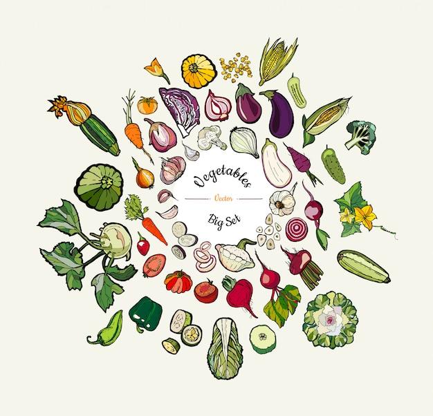 Gemüse lokalisierte hand gezeichnete abbildung. vector großen satz gezeichnetes farbiges gemüse des hippies hand für vegetarisches plakat Premium Vektoren