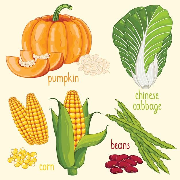 Gemüsemischung vektor Premium Vektoren