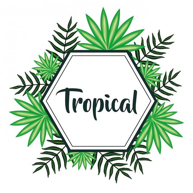 Geometrischer rahmen mit tropischen blättern Premium Vektoren