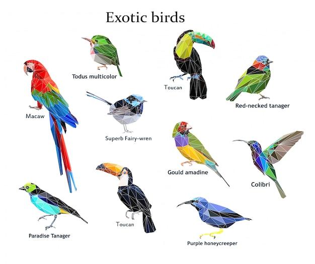 Gesetzte vektorillustration des exotischen vogels niedrig poly Premium Vektoren