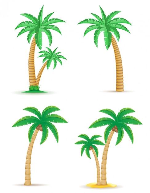 Gesetzte vektorillustration des tropischen baums der palme Premium Vektoren