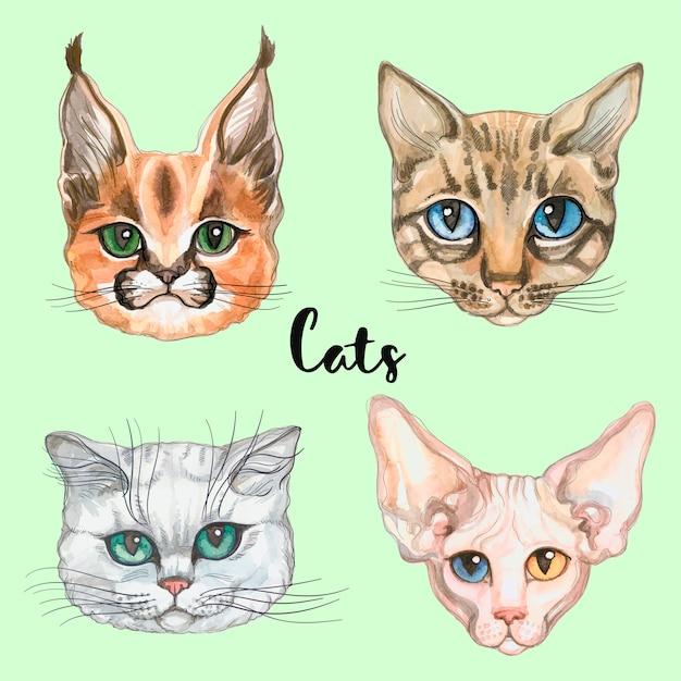 Gesichter von katzen verschiedener rassen. einstellen. Premium Vektoren