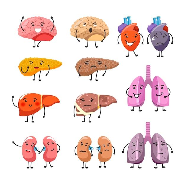 Gesunde und dicke organe mit gesicht und gliedmaßen Premium Vektoren