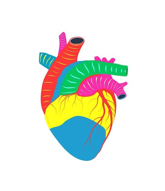 Gesundheitswesen und medizin herz, organspende, liebe und anatomie symbol illustration. Premium Vektoren