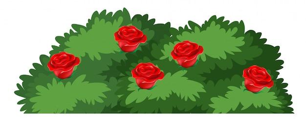 Getrennter rosenbusch auf weißem hintergrund Kostenlosen Vektoren