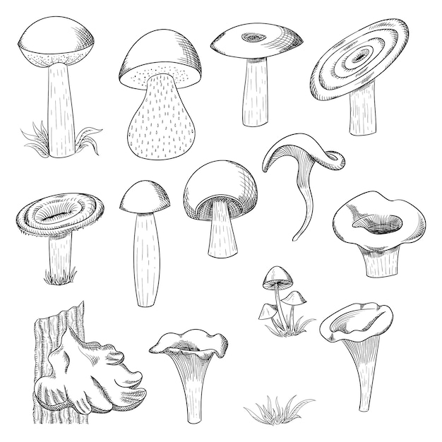Gezeichnete skizzenillustration des pilzes hand. pilzshiitake, neues biologisches lebensmittel lokalisiert auf weiß. Premium Vektoren