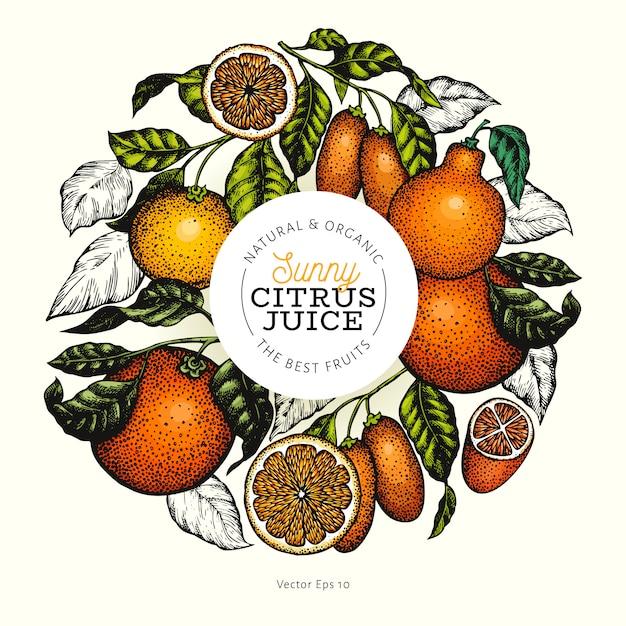 Gezeichnete vektorfarbfruchtillustration des zitrusfruchtdesigns hand. gravierter stil. retro citrus rahmen. Premium Vektoren