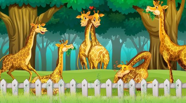 Giraffen in der hölzernen szene Kostenlosen Vektoren