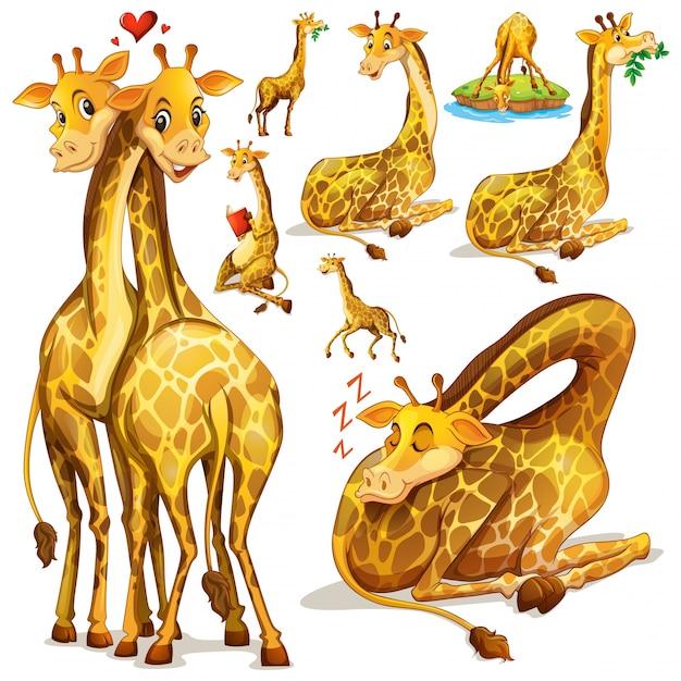 Giraffen in verschiedenen positionen abbildung Kostenlosen Vektoren