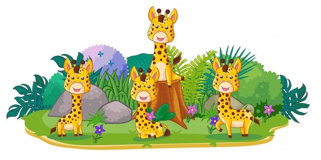 Giraffen spielen zusammen im garten Premium Vektoren