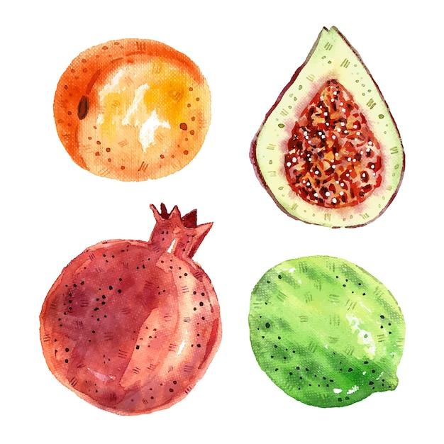 Granatapfel, feige, limette, aprikose. tropische früchte clipart, eingestellt. aquarellillustration. rohes frisches gesundes essen. vegan, vegetarisch. sommer. Premium Vektoren