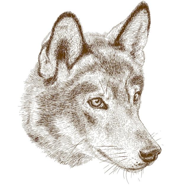 Gravieren der antiken illustration des wolfkopfes Premium Vektoren