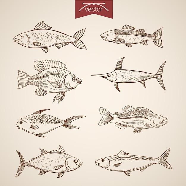 Gravur vintage handgezeichnete fischsammlung. Kostenlosen Vektoren