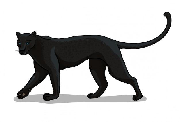 Große katze des panthers lokalisiert in der karikaturart. pädagogische zoologieillustration Premium Vektoren