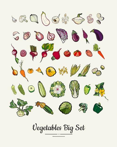 Große reihe von hipster handgezeichneten farbigen gemüse Premium Vektoren