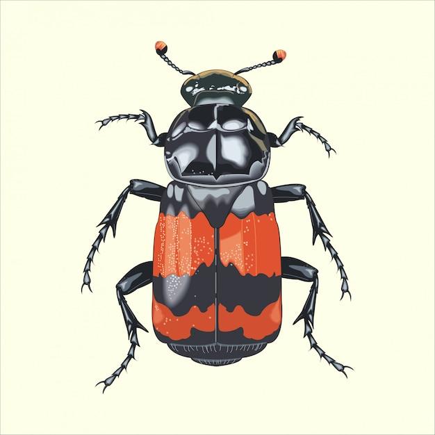 Großer insektenkäfer Premium Vektoren