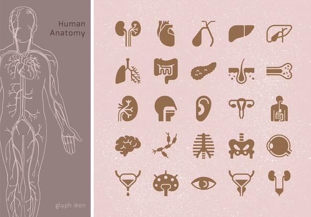 Großer satz lineare ikonen von menschlichen inneren organen mit signaturen. geeignet für print, web und präsentationen. Premium Vektoren
