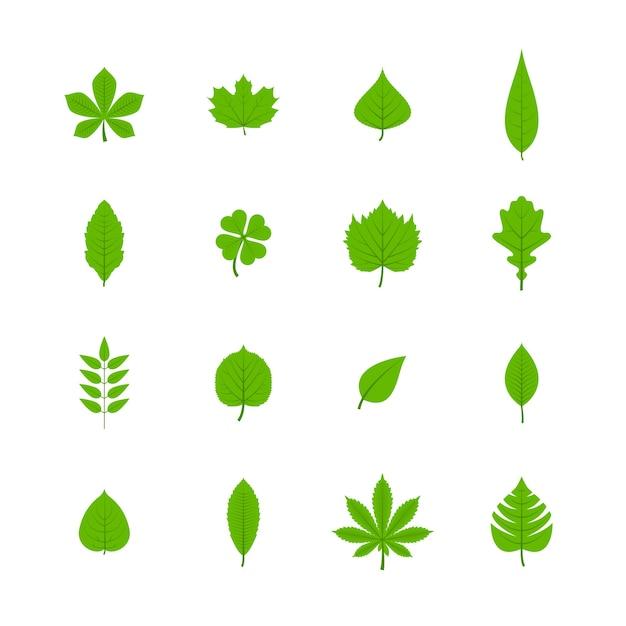 Grüne bäume blätter flache ikonen satz von eiche aspen linde ahorn kastanie klee pflanzen isoliert vektor-illustration Kostenlosen Vektoren