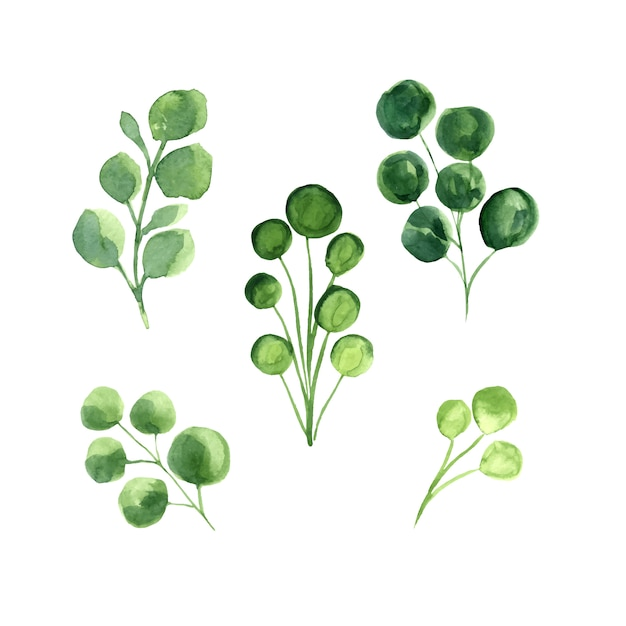 Grüne blätter vektor aquarell set. Kostenlosen Vektoren
