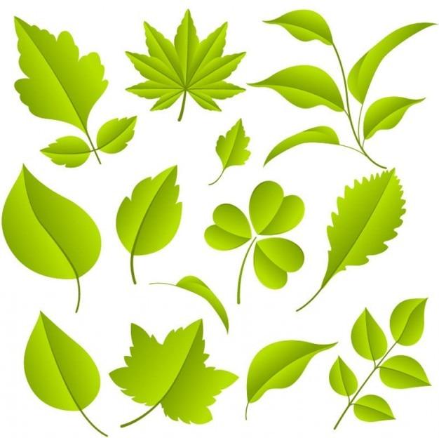 Grüne blätter vektor-grafik-set Kostenlosen Vektoren