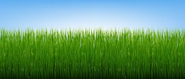 Grüne grasgrenze und hintergrund des blauen himmels mit gradient mesh, illustration Premium Vektoren