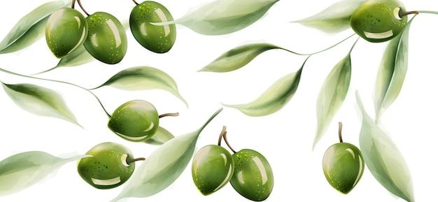 Grüne oliven mit blättern und licht, das über struktur nachdenkt Premium Vektoren