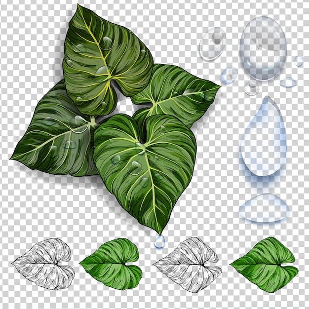 Grüne tropische blätter. grafikdesign mit erstaunlichen palmen. Premium Vektoren