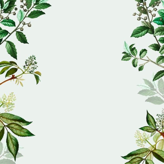 Grüner botanischer rahmen Kostenlosen Vektoren