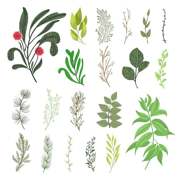 Grüner wald verlässt kräuterniederlassungen natürliches laub des tropischen grünvektorelementsatzes. dekorative botanische vektordesignillustration Kostenlosen Vektoren