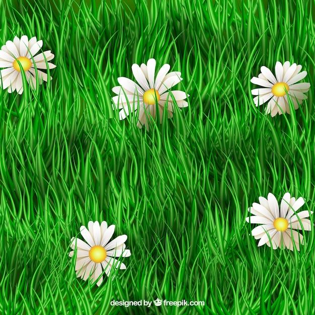 Grünes gras und gänseblümchen Premium Vektoren