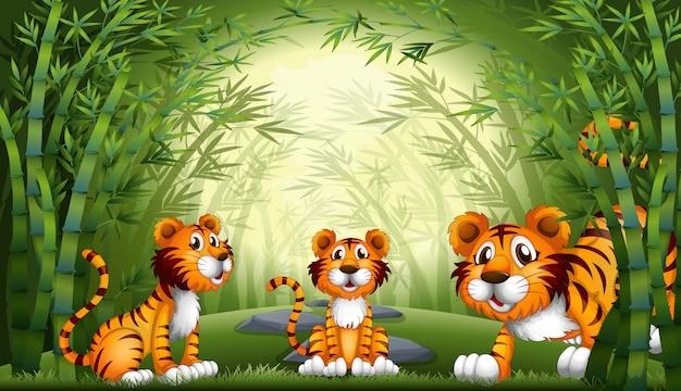 Gruppe des tigers am bambuswald Premium Vektoren