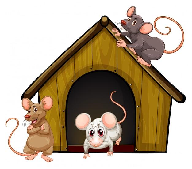 Gruppe von niedlichen mäusen mit kleinem haus auf weißem hintergrund Kostenlosen Vektoren