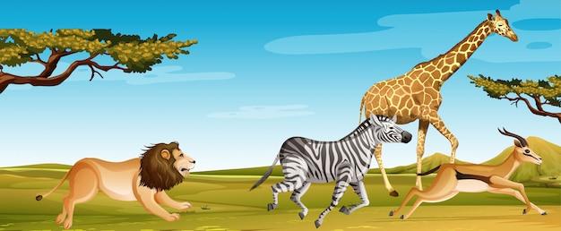 Gruppe wilder afrikanischer tiere, die im savannenfeld laufen Premium Vektoren