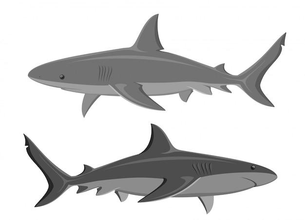 Haie set von zwei großen haifischen getrennt auf weiß. vektor. Premium Vektoren