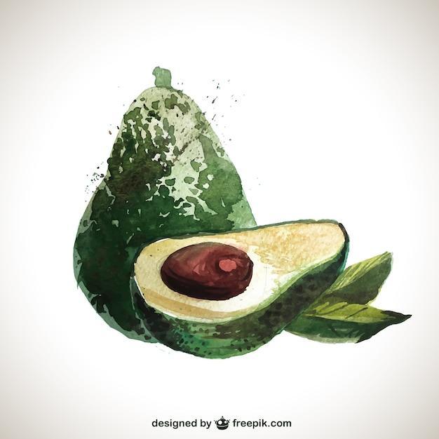 Hand bemalt avocado Kostenlosen Vektoren