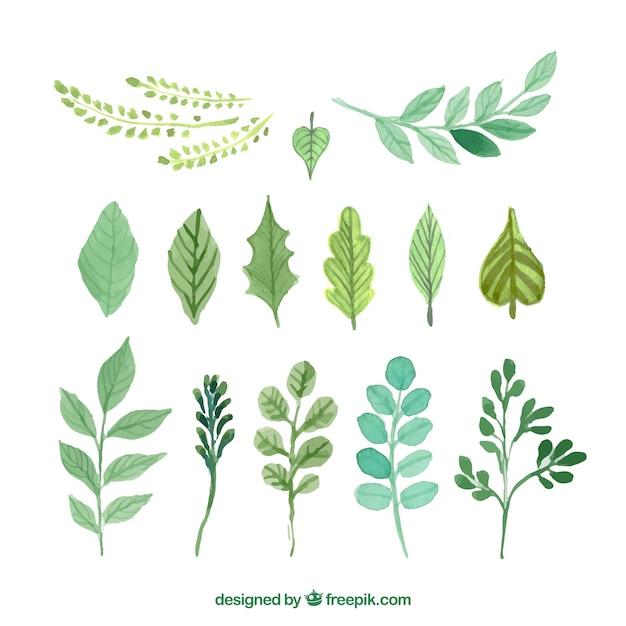 Hand bemalt grünen Blättern  Download der Premium Vektor