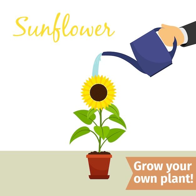 Hand, die sonnenblumenanlage wässert Premium Vektoren